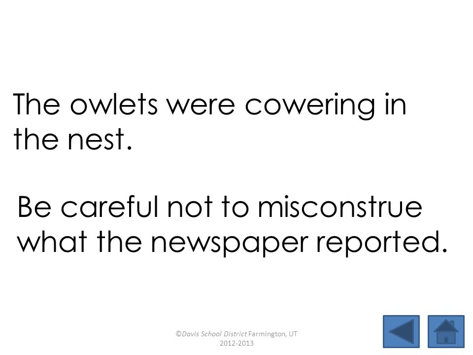 The owlets were cowering in the nest. Be careful not to misconstrue what the newspaper reported. ©Davis School District Farmington, UT 2012-2013