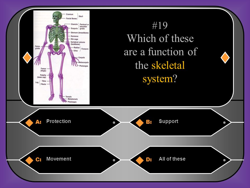 A:B: ProtectionSupport C:D: MovementAll of these #19 Which of these are a function of the skeletal system?