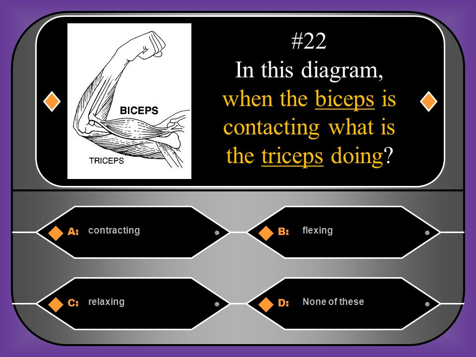 A:B: contractingflexing C:D: relaxingNone of these #22 In this diagram, when the biceps is contacting what is the triceps doing?