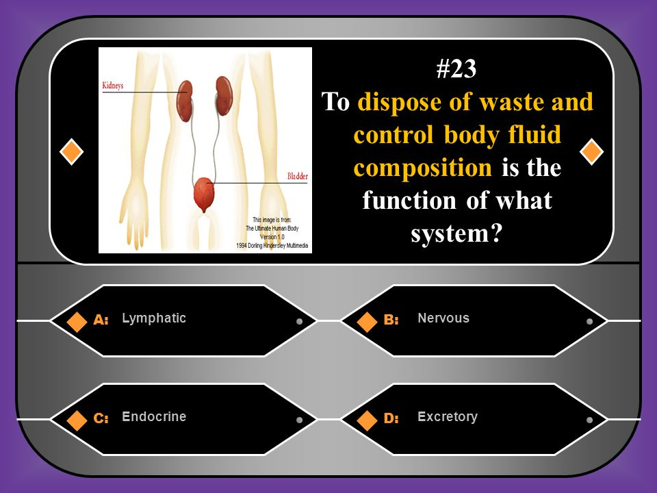 A:B: LymphaticNervous C:D: EndocrineExcretory #23 To dispose of waste and control body fluid composition is the function of what system?