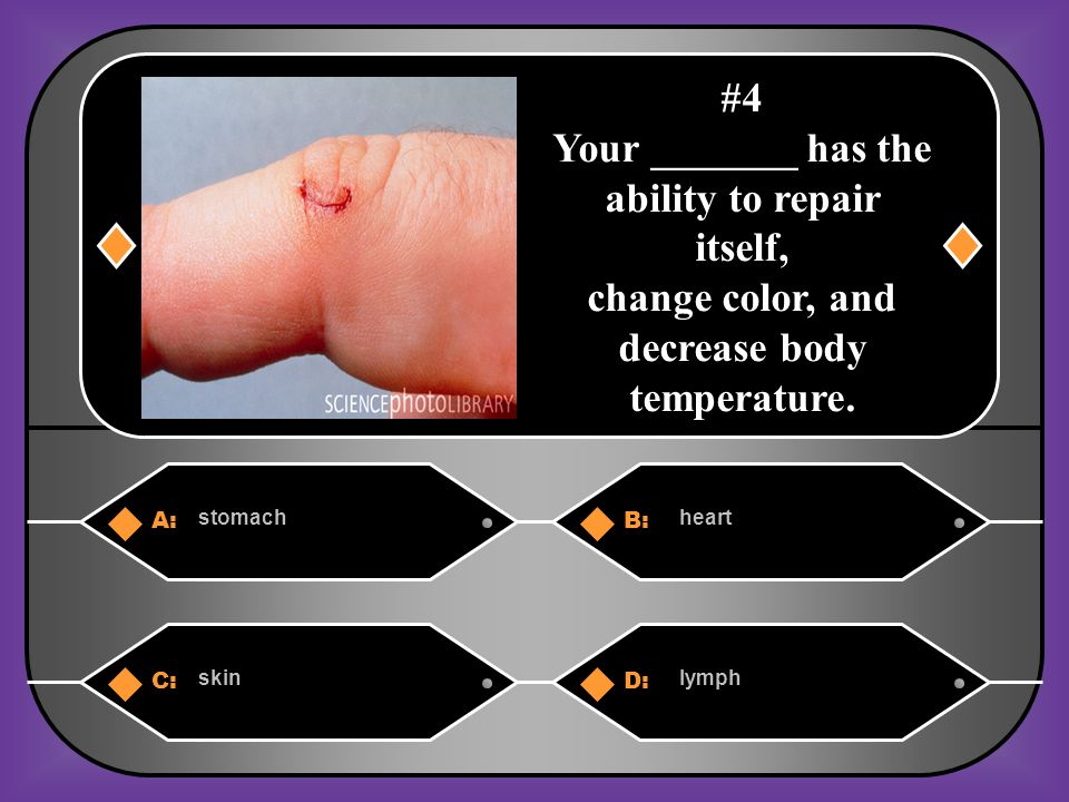 A:B: stomachheart C:D: skinlymph #4 Your _______ has the ability to repair itself, change color, and decrease body temperature.