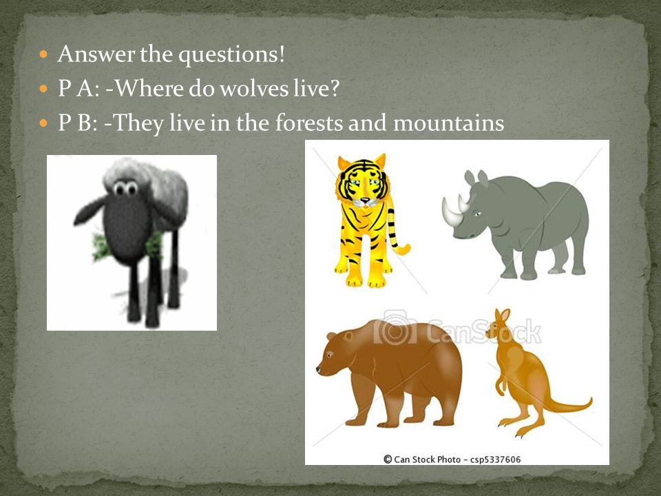 Answer the questions! P A: -Where do wolves live? P B: -They live in the forests and mountains