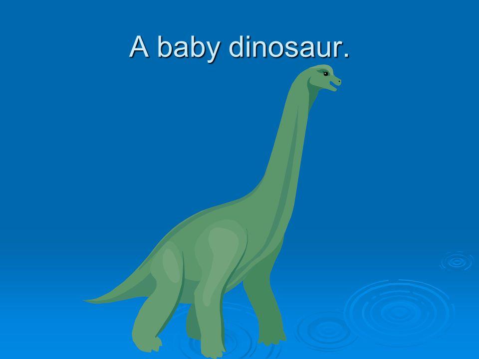 A baby dinosaur.