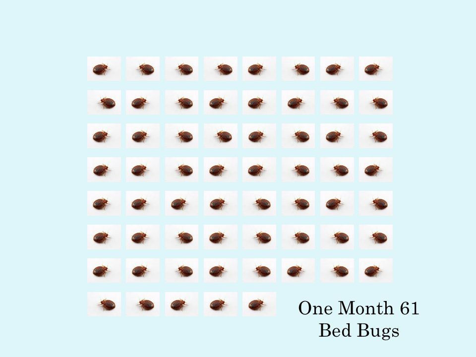 One Bed Bug