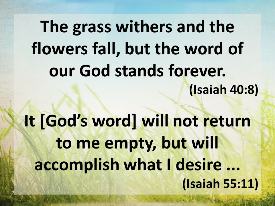 The grass withers and the flowers fall, but the word of our God stands forever. (Isaiah 40:8) It [God's word] will not return to me empty, but will ac