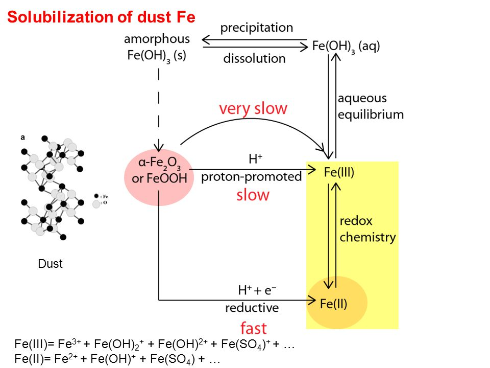 Solubilization of dust Fe Dust Fe(III)= Fe 3+ + Fe(OH) 2 + + Fe(OH) 2+ + Fe(SO 4 ) + + … Fe(II)= Fe 2+ + Fe(OH) + + Fe(SO 4 ) + …