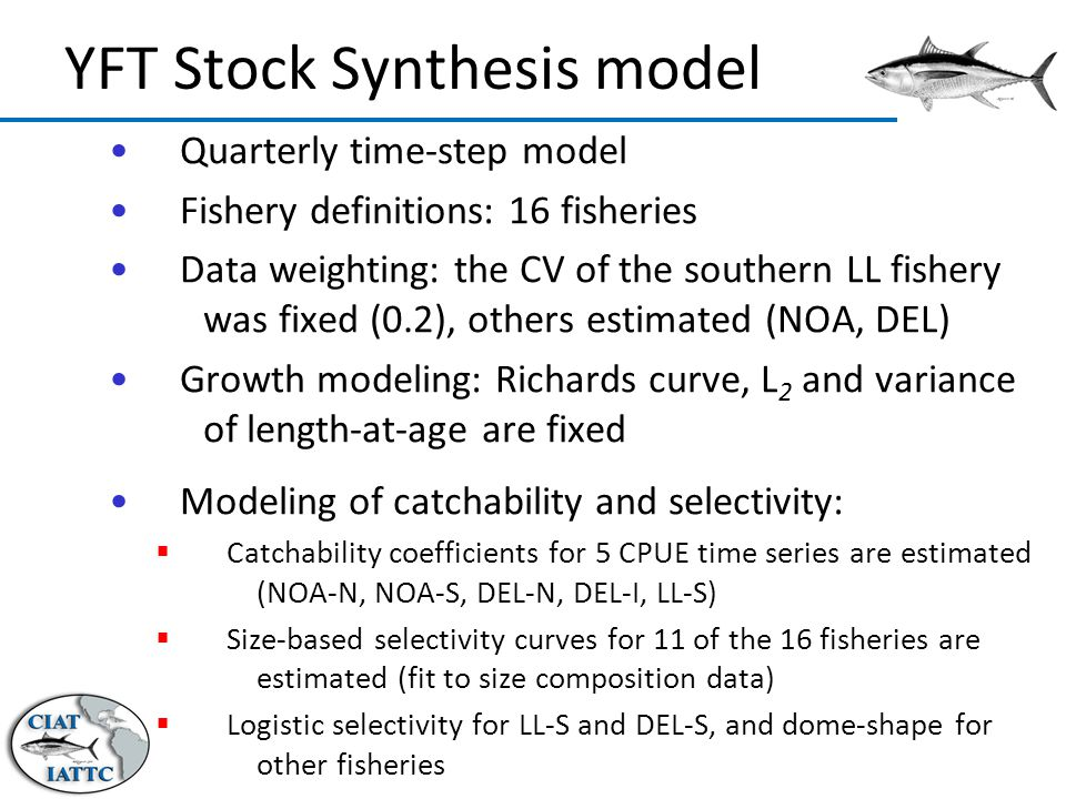 Quarterly time-step model Fishery definitions: 16 fisheries Data weighting: the CV of the southern LL fishery was fixed (0.2), others estimated (NOA, DEL) Growth modeling: Richards curve, L 2 and variance of length-at-age are fixed Modeling of catchability and selectivity:  Catchability coefficients for 5 CPUE time series are estimated (NOA-N, NOA-S, DEL-N, DEL-I, LL-S)  Size-based selectivity curves for 11 of the 16 fisheries are estimated (fit to size composition data)  Logistic selectivity for LL-S and DEL-S, and dome-shape for other fisheries YFT Stock Synthesis model