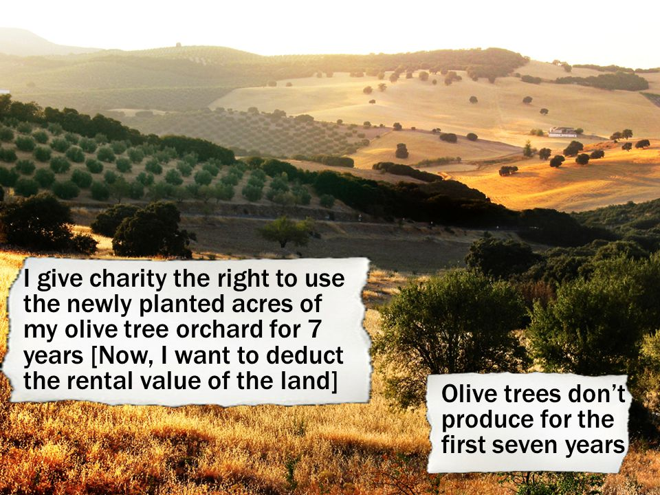 I give charity the right to use the newly planted acres of my olive tree orchard for 7 years [Now, I want to deduct the rental value of the land] Olive trees don't produce for the first seven years