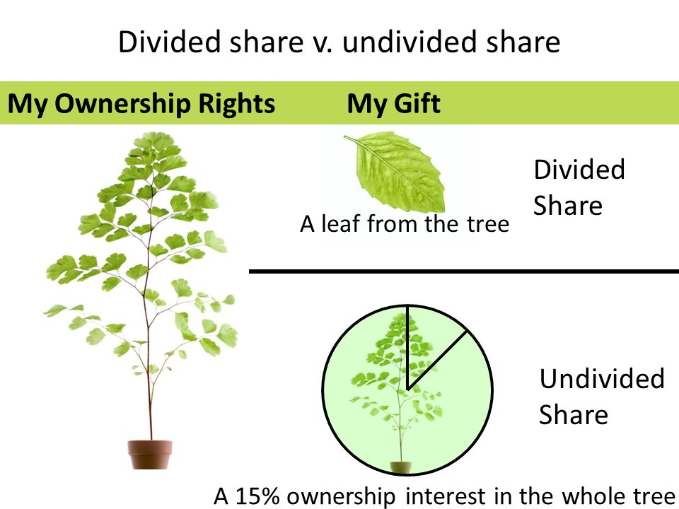 Divided share v. undivided share A leaf from the tree Divided Share A 15% ownership interest in the whole tree Undivided Share My Ownership RightsMy G