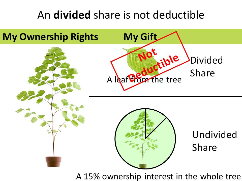 Divided Share Undivided Share A leaf from the tree A 15% ownership interest in the whole tree An divided share is not deductible My Ownership RightsMy