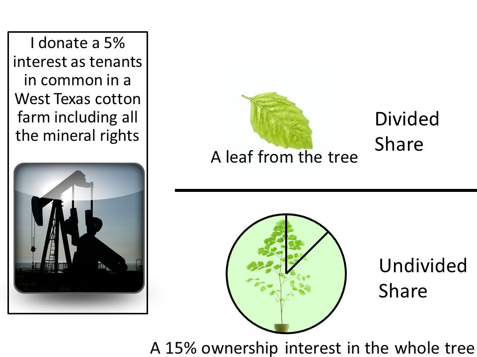 Divided Share Undivided Share I donate a 5% interest as tenants in common in a West Texas cotton farm including all the mineral rights A leaf from the