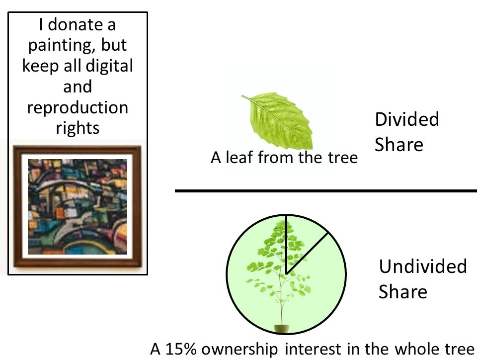 Divided Share Undivided Share I donate a painting, but keep all digital and reproduction rights A leaf from the tree A 15% ownership interest in the w