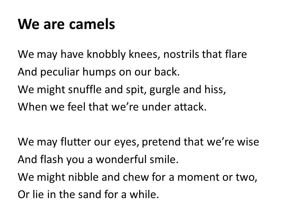 We are camels We may have knobbly knees, nostrils that flare And peculiar humps on our back. We might snuffle and spit, gurgle and hiss, When we feel