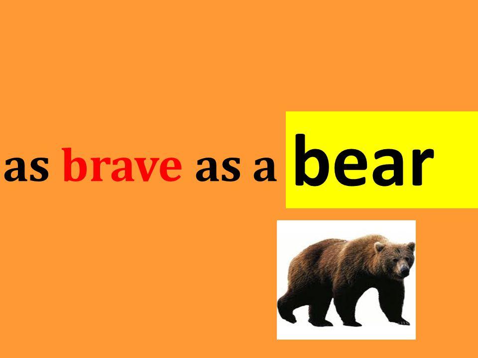 as brave as a bear