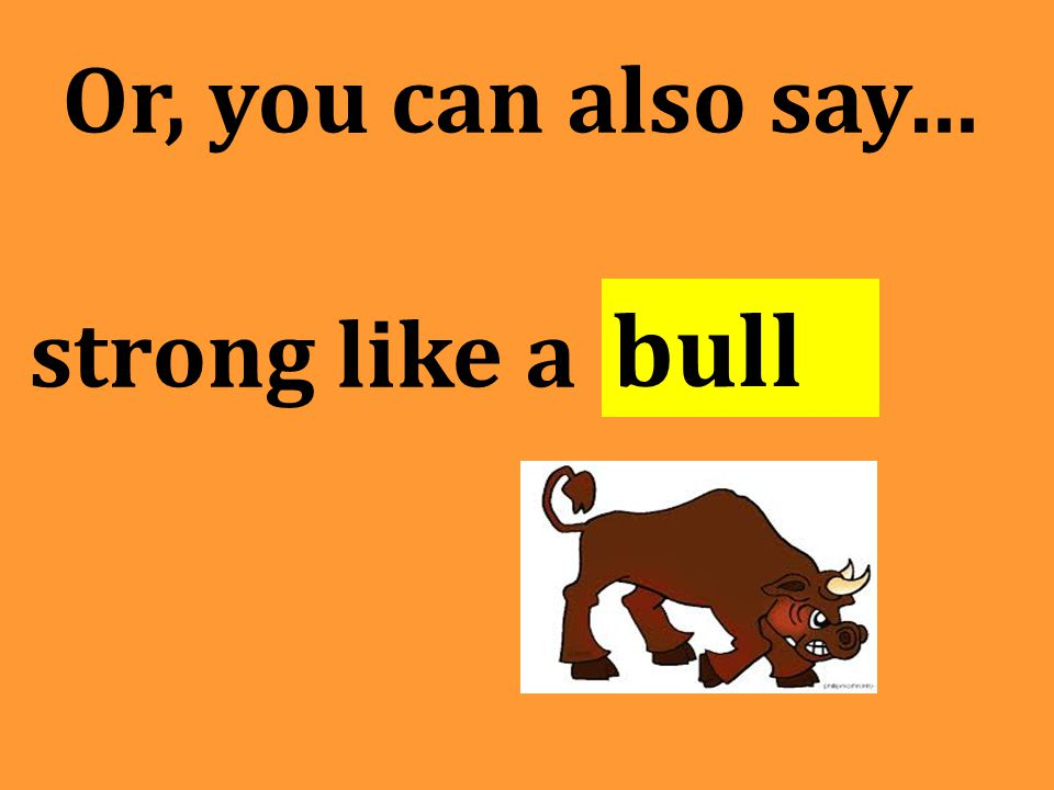 Or, you can also say… strong like a bull