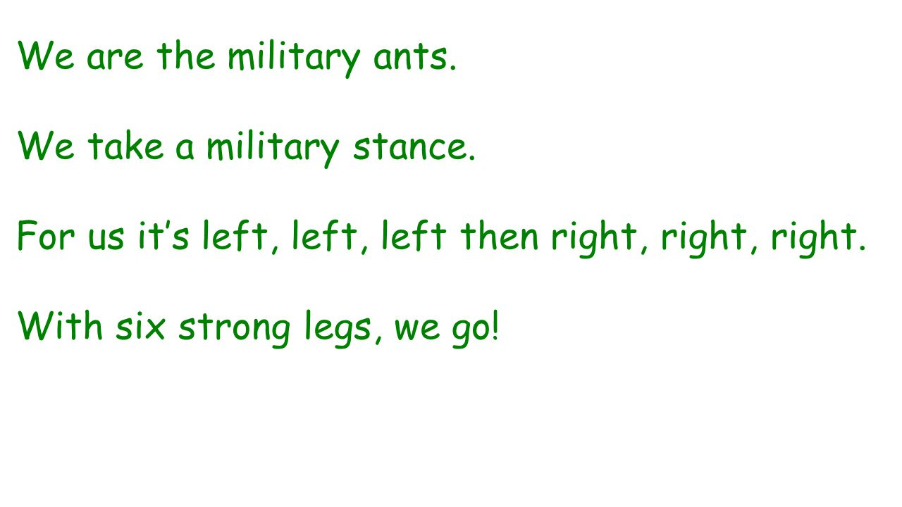 We are the military ants. We take a military stance. For us it's left, left, left then right, right, right. With six strong legs, we go!