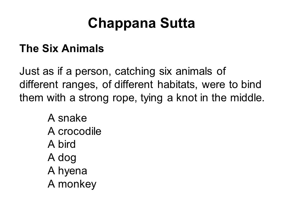 Chappana Sutta The Six Animals Just as if a person, catching six animals of different ranges, of different habitats, were to bind them with a strong rope, tying a knot in the middle.
