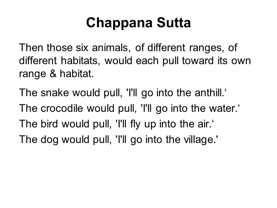 Chappana Sutta Then those six animals, of different ranges, of different habitats, would each pull toward its own range & habitat.