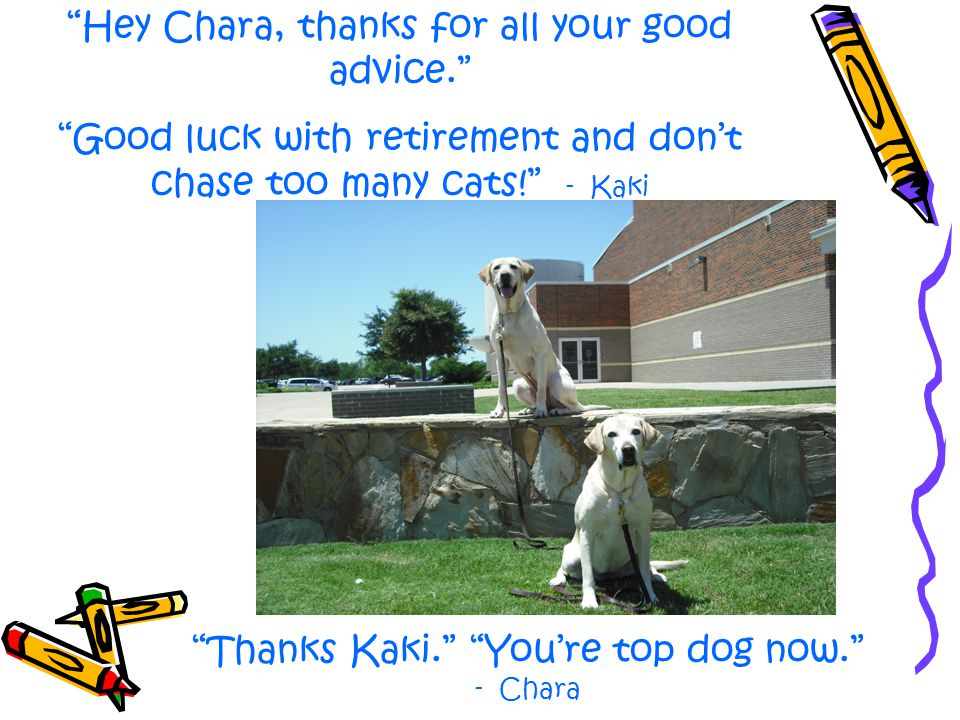 """A special """"Thank You"""" to everyone for making my 10 years at Plano ISD the best any dog could ask for. -Chara"""