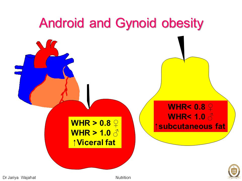 Nutrition Dr Jariya Wajahat Android and Gynoid obesity WHR > 0.8 ♀ WHR > 1.0 ♂  Viceral fat WHR< 0.8 ♀ WHR< 1.0 ♂  subcutaneous fat