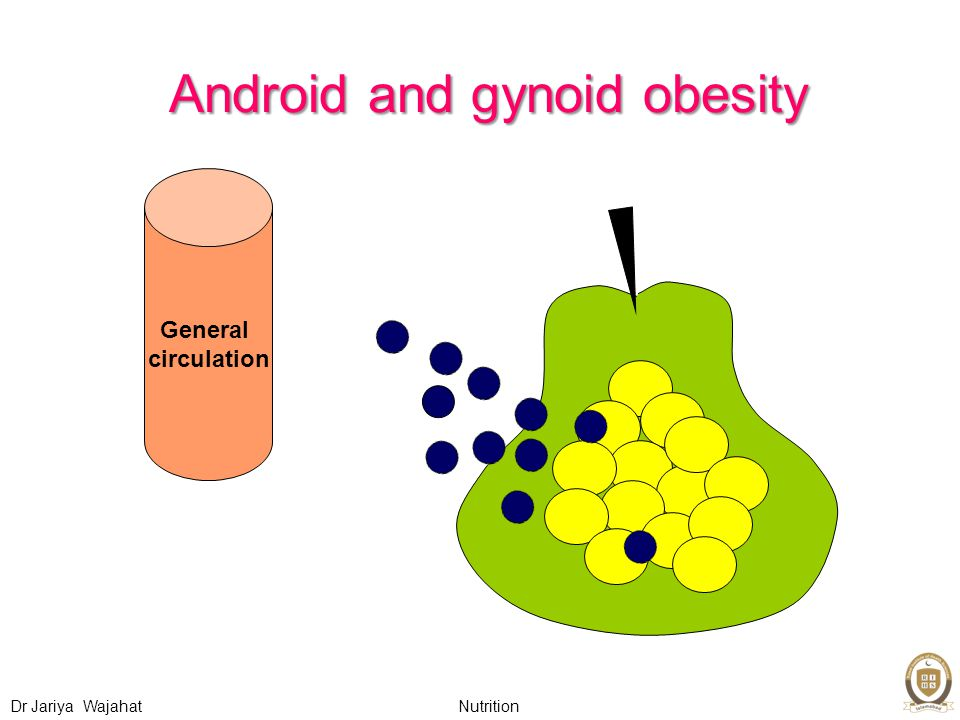 Nutrition Dr Jariya Wajahat Android and gynoid obesity General circulation