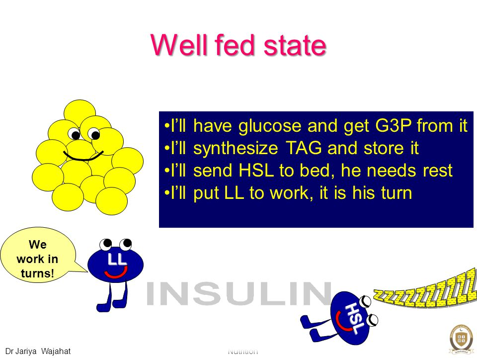 Nutrition Dr Jariya Wajahat Well fed state I'll have glucose and get G3P from it I'll synthesize TAG and store it I'll send HSL to bed, he needs rest I'll put LL to work, it is his turn HSL LL We work in turns!
