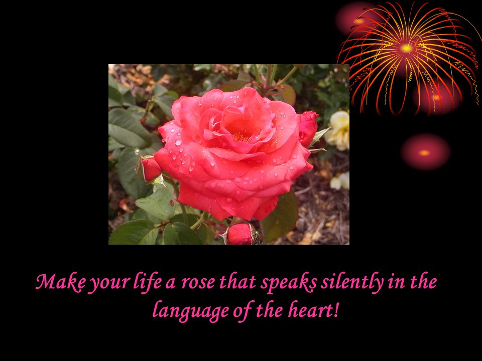 Make your life a rose that speaks silently in the language of the heart!