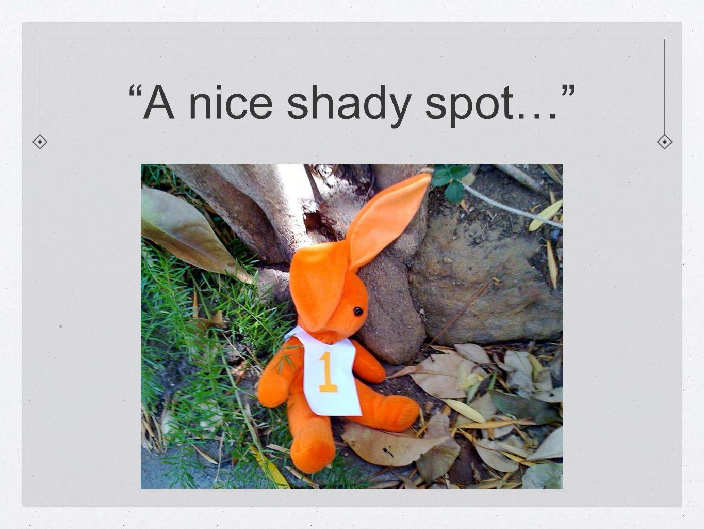 A nice shady spot… .