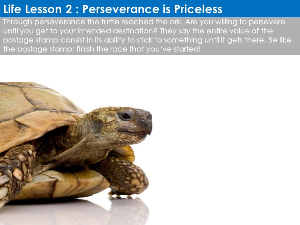 Through perseverance the turtle reached the ark. Are you willing to persevere until you get to your intended destination? They say the entire value of