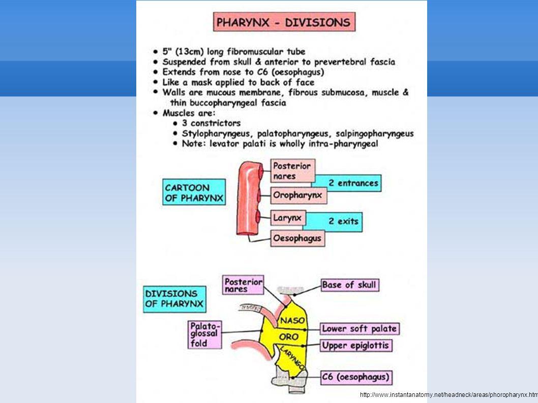 http://www.instantanatomy.net/headneck/areas/phoropharynx.html