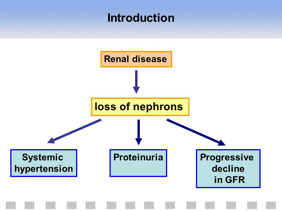 Renal disease loss of nephrons Systemic hypertension ProteinuriaProgressive decline in GFR Introduction
