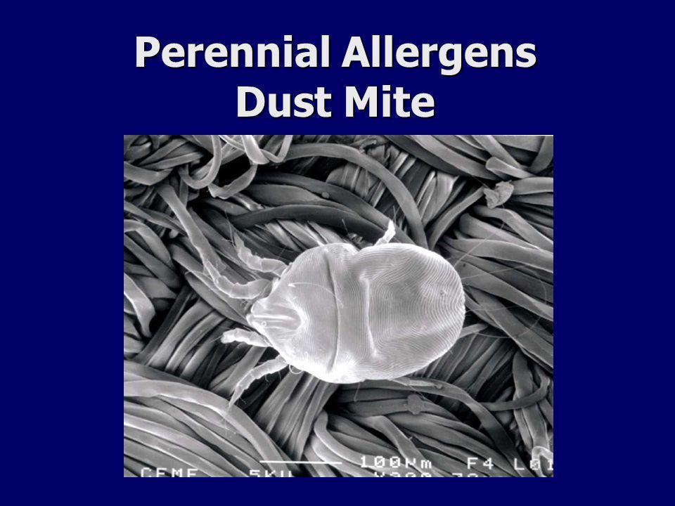 Perennial Allergens Dust Mite