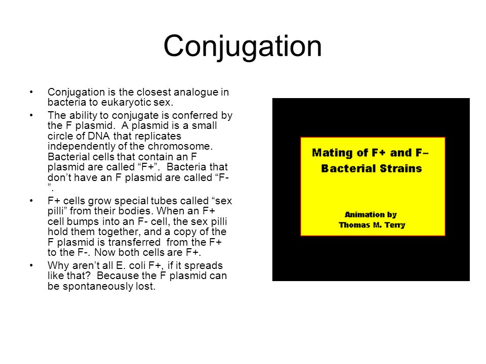 Conjugation Conjugation is the closest analogue in bacteria to eukaryotic sex. The ability to conjugate is conferred by the F plasmid. A plasmid is a