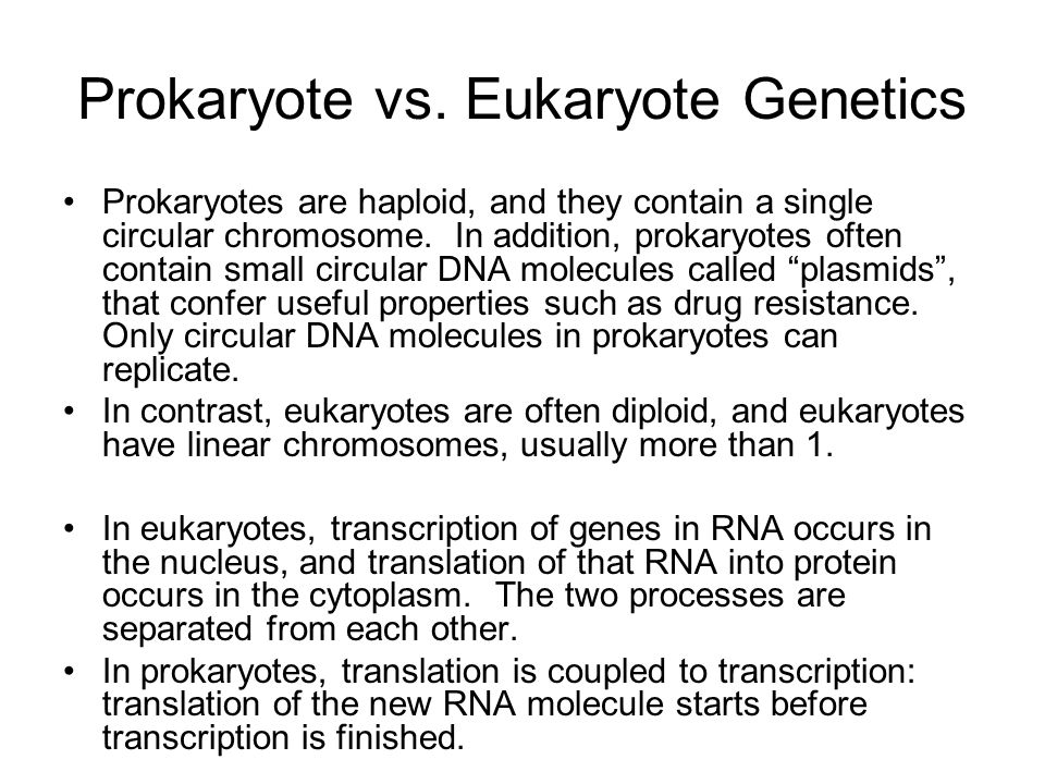 Prokaryote vs. Eukaryote Genetics Prokaryotes are haploid, and they contain a single circular chromosome. In addition, prokaryotes often contain small