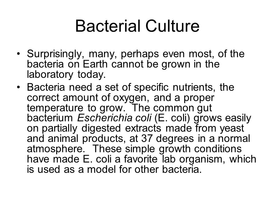 Bacterial Culture Surprisingly, many, perhaps even most, of the bacteria on Earth cannot be grown in the laboratory today. Bacteria need a set of spec