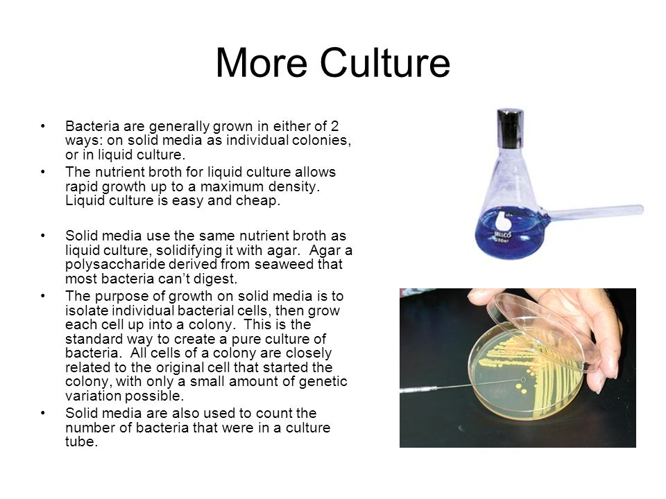 More Culture Bacteria are generally grown in either of 2 ways: on solid media as individual colonies, or in liquid culture. The nutrient broth for liq