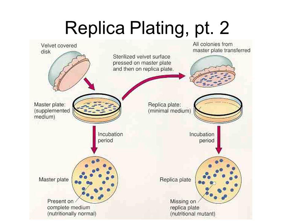 Replica Plating, pt. 2