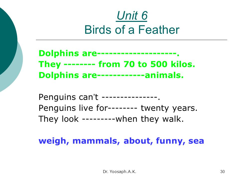 Dr.Yoosaph.A.K.30 Unit 6 Birds of a Feather Dolphins are--------------------.