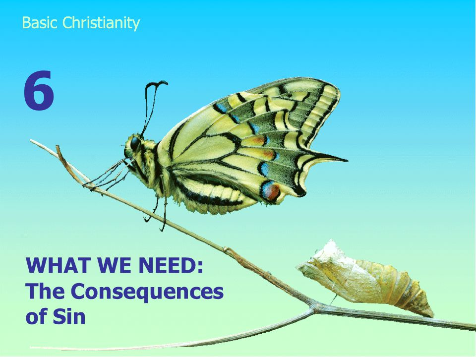 WHAT WE NEED: The Consequences of Sin 6
