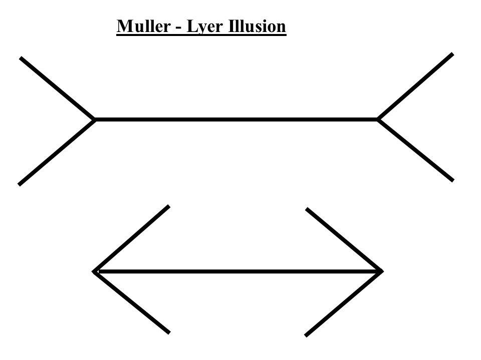Muller - Lyer Illusion