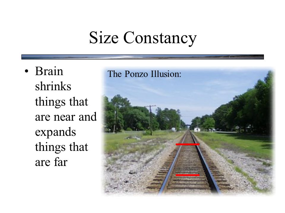 Size Constancy Brain shrinks things that are near and expands things that are far The Ponzo Illusion:
