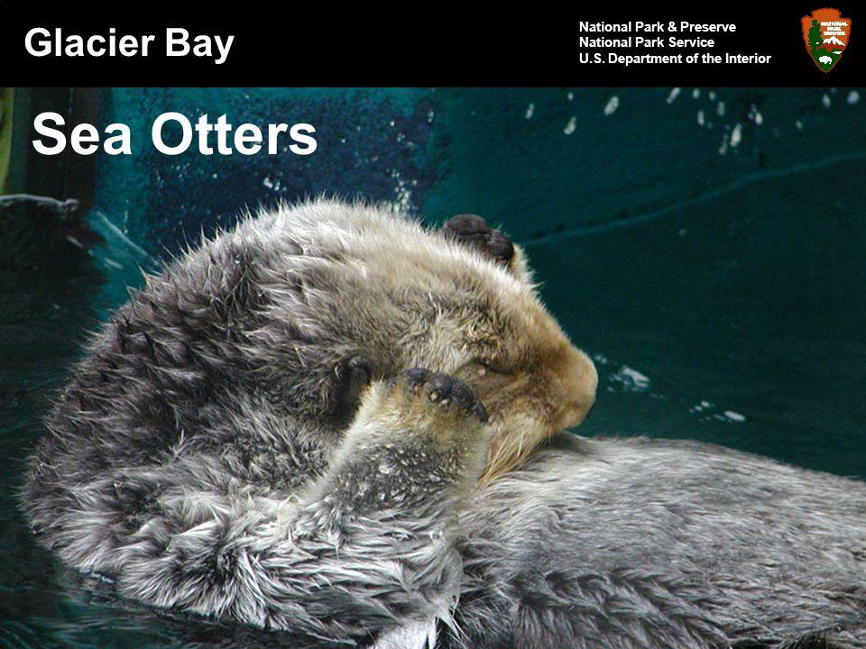Glacier Bay National Park & Preserve National Park Service U.S. Department of the Interior Sea Otters