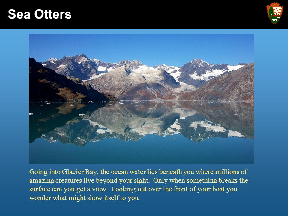 Like us, sea otters are born small and have no clue about how to live in Glacier Bay.