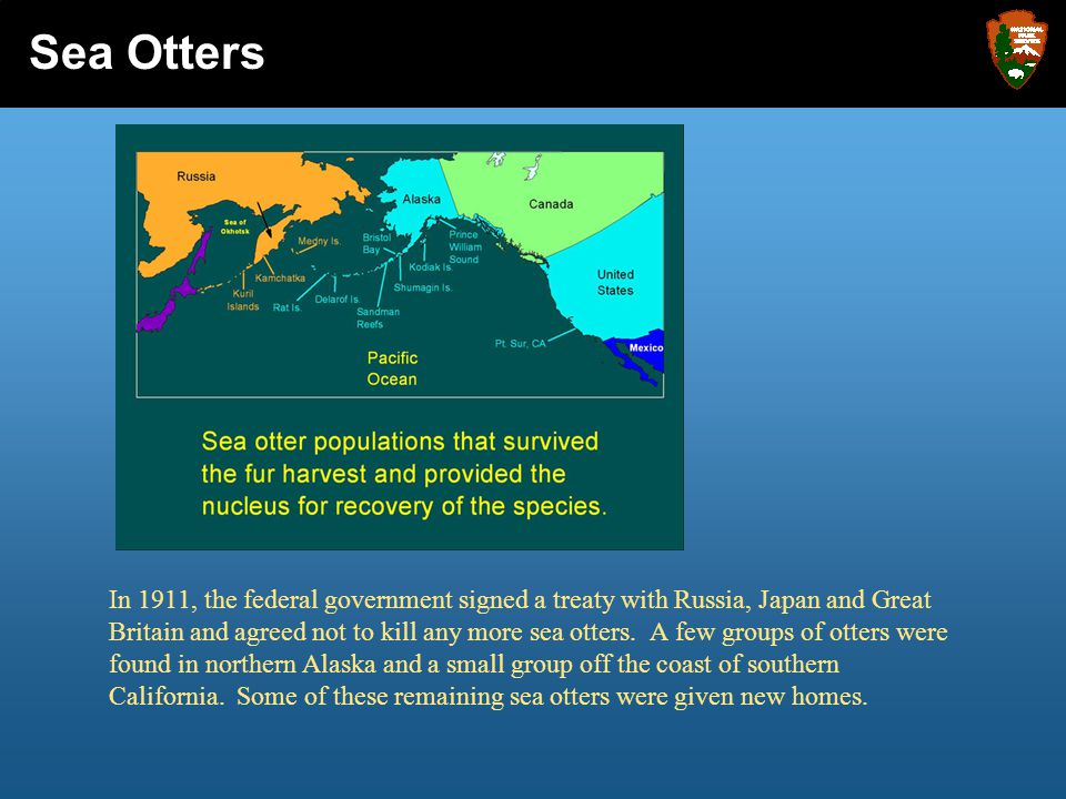 In 1911, the federal government signed a treaty with Russia, Japan and Great Britain and agreed not to kill any more sea otters. A few groups of otter