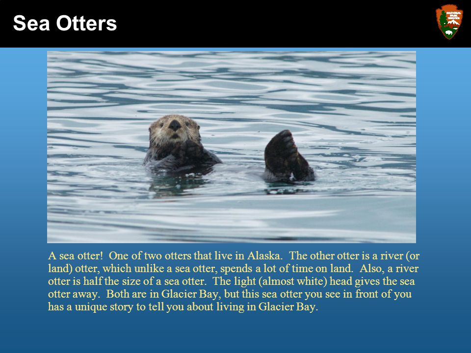 So what are sea otters.
