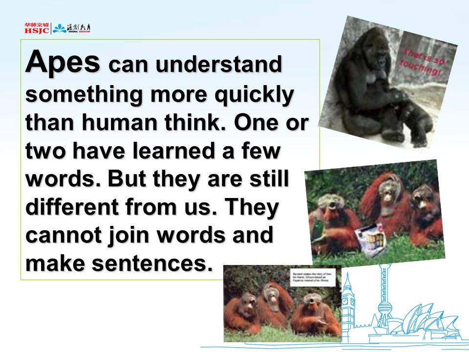 Apes can understand something more quickly than human think. One or two have learned a few words. But they are still different from us. They cannot jo