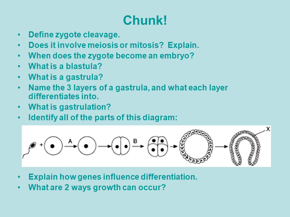 Chunk.Define zygote cleavage. Does it involve meiosis or mitosis.