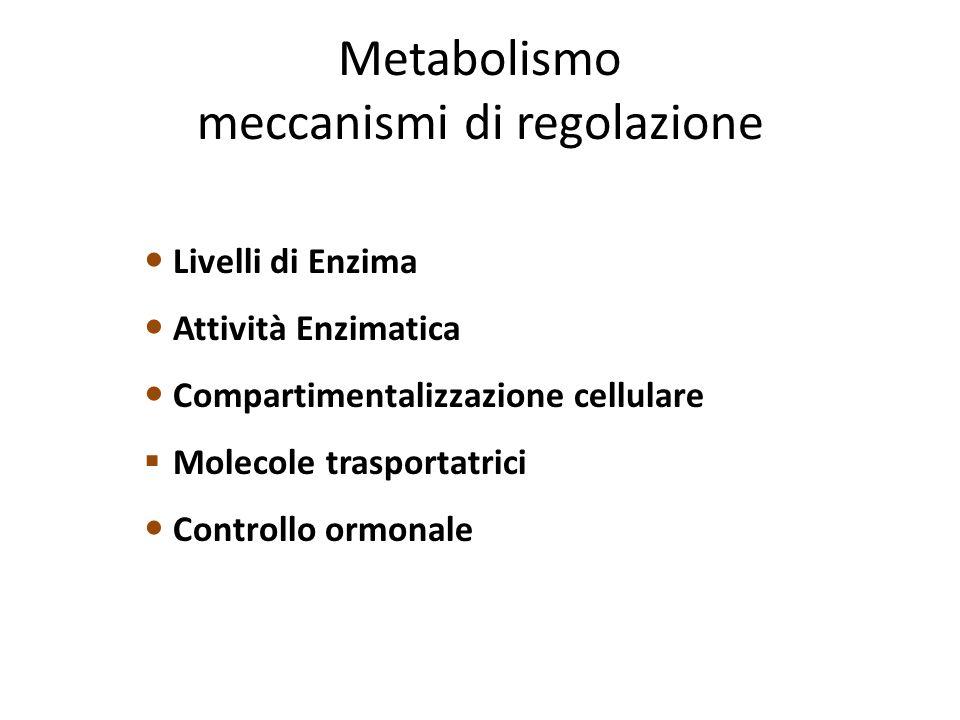 Metabolismo meccanismi di regolazione Livelli di Enzima Attività Enzimatica Compartimentalizzazione cellulare  Molecole trasportatrici Controllo ormonale