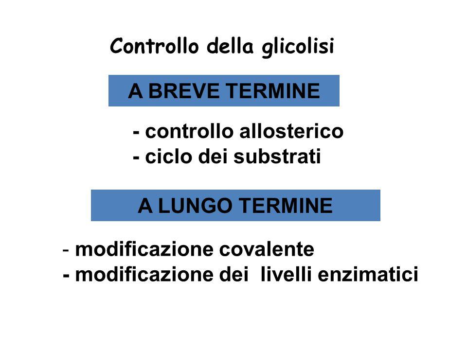 Controllo della glicolisi A LUNGO TERMINE A BREVE TERMINE - controllo allosterico - ciclo dei substrati - modificazione covalente - modificazione dei livelli enzimatici