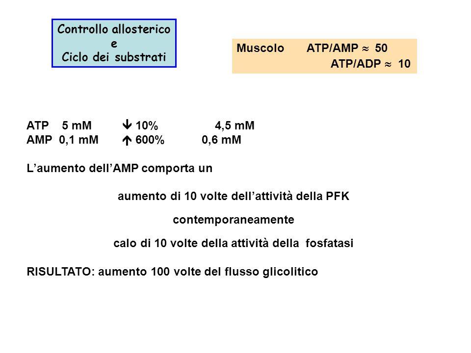 Muscolo ATP/AMP  50 ATP/ADP  10 Controllo allosterico e Ciclo dei substrati ATP 5 mM  10%4,5 mM AMP 0,1 mM  600% 0,6 mM L'aumento dell'AMP comporta un aumento di 10 volte dell'attività della PFK contemporaneamente calo di 10 volte della attività della fosfatasi RISULTATO: aumento 100 volte del flusso glicolitico